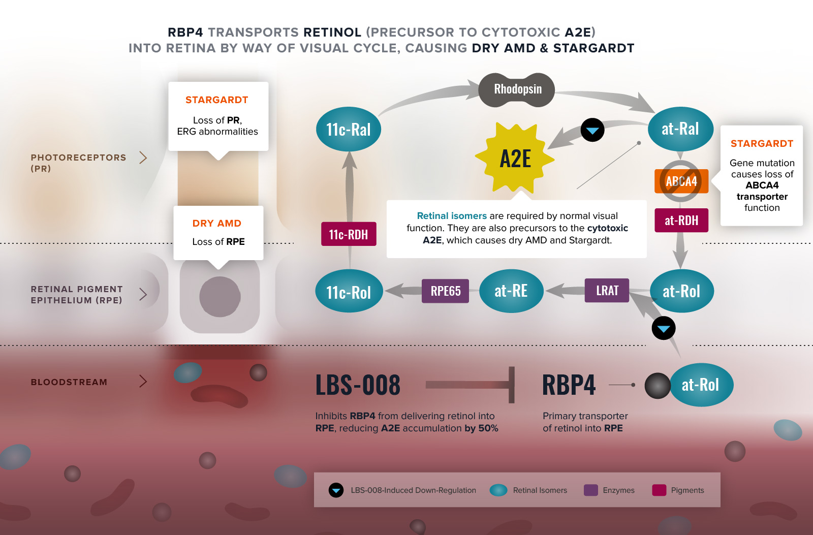 LBS-008 RBP4's Role in Visual Cycle